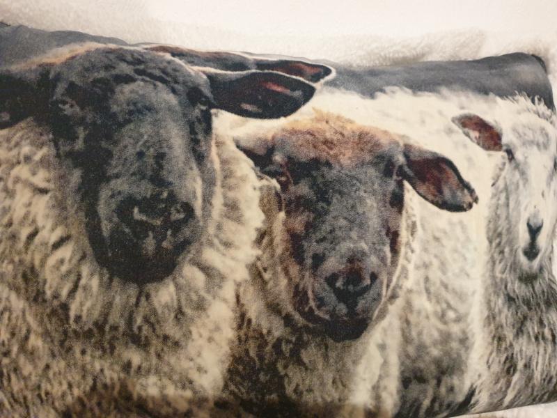 Coussin mouton sherpa 40x60